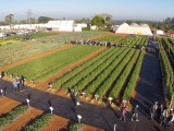 Open Field Day Agristar completa 10 anos