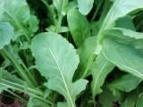 Agristar leva variedades inovadoras aos produtores na Hortitec
