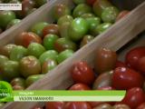Hortitec: maior feira técnica de horticultura da América Latina